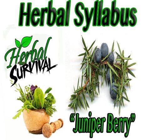 """herbal Syllabus """"Juniper Berry"""